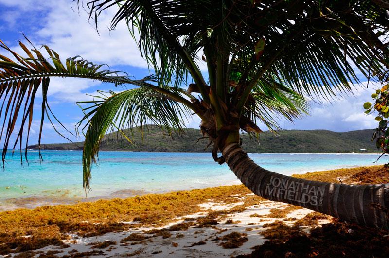 culebra-palm